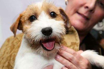 New dog breeds at today's Westminster dog show!!