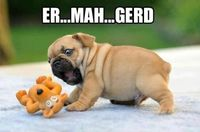 Excited pug is excited
