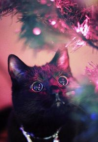 Mesmerized by the lights...