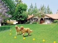 The newly invented Wireless dog fences could be the answer tor your pet dog's security problem. This protective measure has already interests...