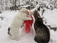 """It fell in love with the snowman"""