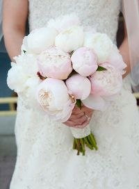 peonies are the best