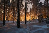 Winter glow...