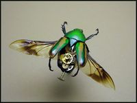 Insect Lab - gorgeous creations