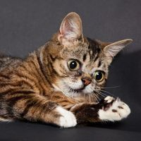 #LilBub is the best.