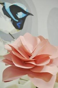 Paper Flower I made 2011. Photography: Tania McCarteney. #paper #flowers