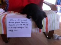Dog Shaming. My new favorite website. This is my dog Loki. I went out to buy him more chewy bones (so he wouldn't eat shoes) and he assumed the worst and chewed up my favourite pair of shoes. ironic shame