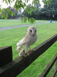 Mom And Baby Owl - SO CUTE!!!!