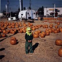 Kermit in a pumpkin patch - 1979