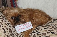 the couch is no place for hidden meat dog shame blog