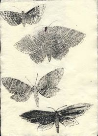 moths on beautiful paper