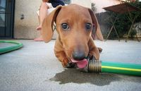 I love wiener dogs. Their eyes have so much soul.
