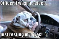 Sleeping at the wheel...